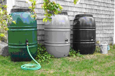 Burl rain_barrels